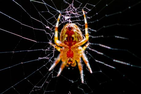 Spin bezig met web