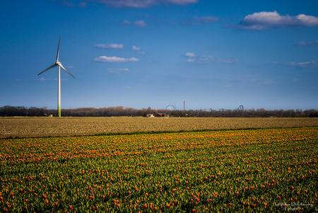 Tulpen 2 - De tulpenvelden komen langzaam in kleur. - foto door Beuv-foto op 21-04-2021 - locatie: 8256 Biddinghuizen, Nederland - deze foto bevat: tulpen, tulpenvelden, flevopolder, flevoland, biddinghuizen, lucht, wolk, bloem, fabriek, dag, ecoregio, mensen in de natuur, natuur, natuurlijk landschap, natuurlijke omgeving