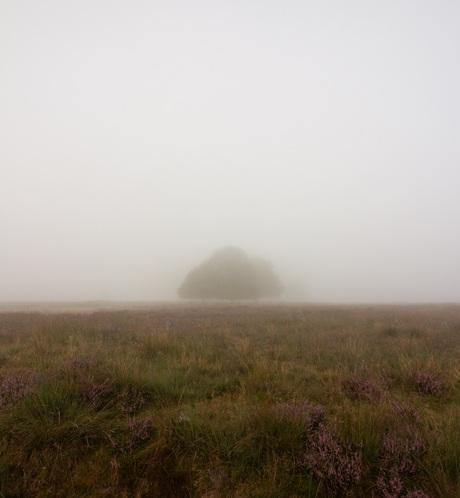 Bomen in de dichte mist