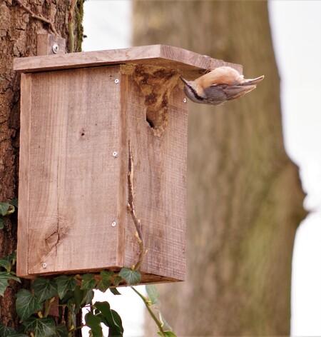 Eindelijk..... - ....een mooie woning gevonden, hebben ze hem op z'n kop gehangen....slimmerikken.... - foto door hanshoeben51 op 13-04-2021 - locatie: Groenlo, Nederland - deze foto bevat: hout, takje, kofferbak, vogelhuisje, beits op hout, door, timmerhout, hardhout, natuurlijk materiaal, huis