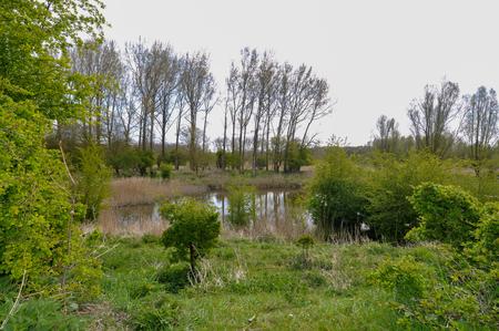 Uitzicht over het vennetje - Uitzicht vanuit een heuvel in het Natuurpark Lelystad. - foto door HeleendeSilva op 05-05-2021 - locatie: Vlotgrasweg 11, 8219 PP Lelystad, Nederland - deze foto bevat: bomen, groen, water, meer, weerspiegeling, lucht, fabriek, water, boom, natuurlijk landschap, fluviatiele landvormen van beken, land veel, lacustrine vlakte, bank, gewoon