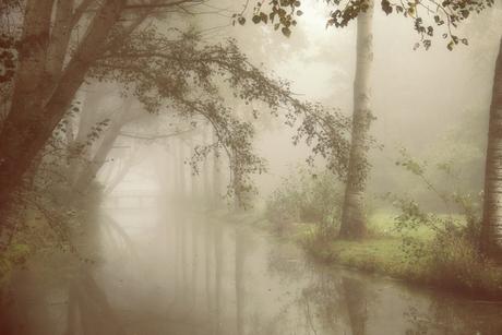 Het elfenbos